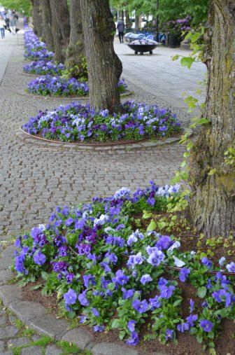 ノルウェー オスロ 通り 花
