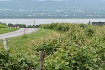 Canada-Quebec-Ile d'Orlean-azienda-vinicola