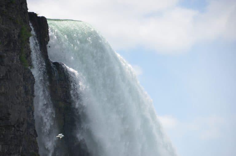 Niagara (17) (Niagara)