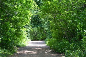 カナダ「赤毛のアン」に登場する愛の小路