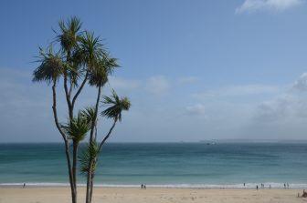 England-Cornwall-St-Ives-palma-mare