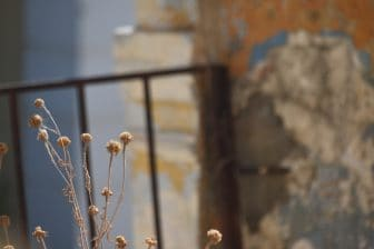Greece-Symi Island-Symi old town-dry-plant-fence-wall-colours
