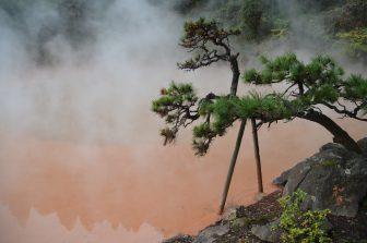 """Japan-Kyushu-Oita-Beppu-Hell Tour-""""Chinoike Jigoku""""-pine tree"""