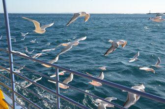 Japan-Kanagawa-Miura-Misaki Port-sightseeing boat-seagulls