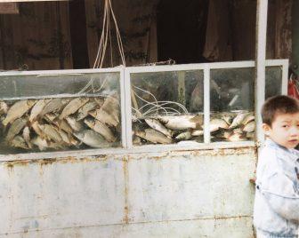 Lanzhou-China-Mercado-Pescado