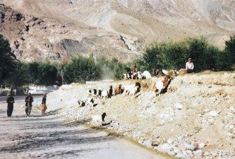 Gilgit-pakistan-cabras