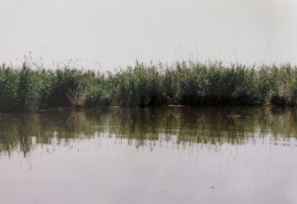 dash on Anzali Lagoon