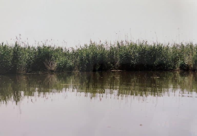 Una corsa veloce nella Laguna di Anzali