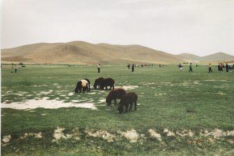 Iran-Maragheh-highland-sheep-people