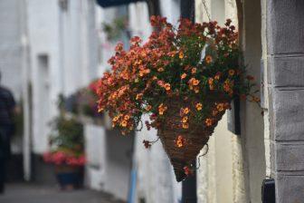 England-Cornwall-Polperro-street-flowers-white houses