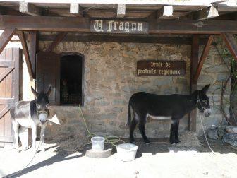 burros-pueblos-Montemaggiore-Córcega-Francia