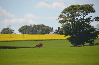 Stonehaven and vicinity (1)